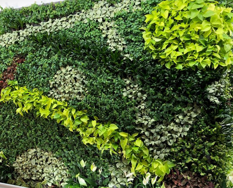jardines verticales naturales